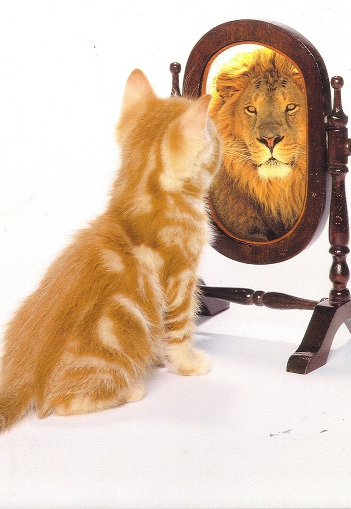 Тест на самооцінку