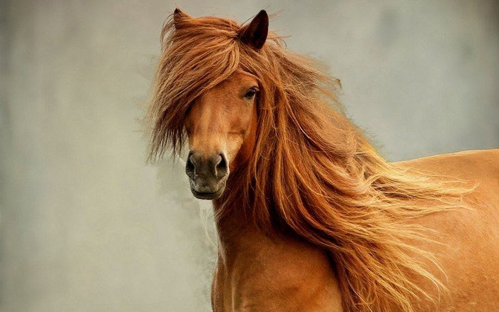 Загадки о домашних животных: конь