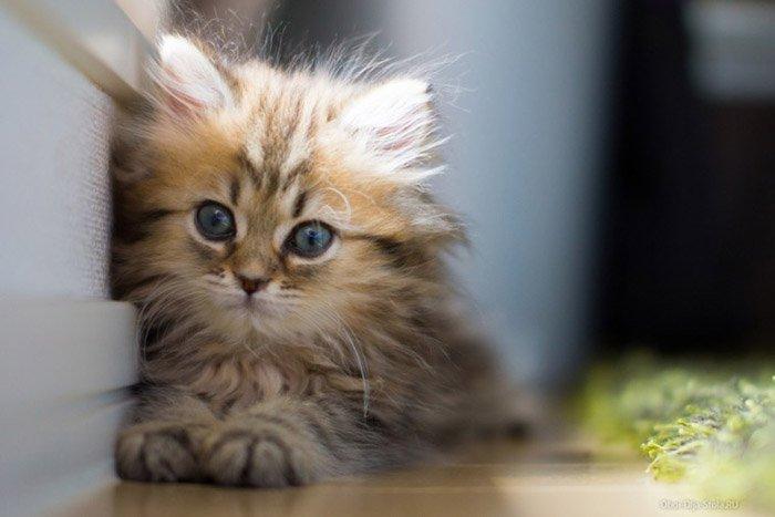 Загадки про тварин: кіт