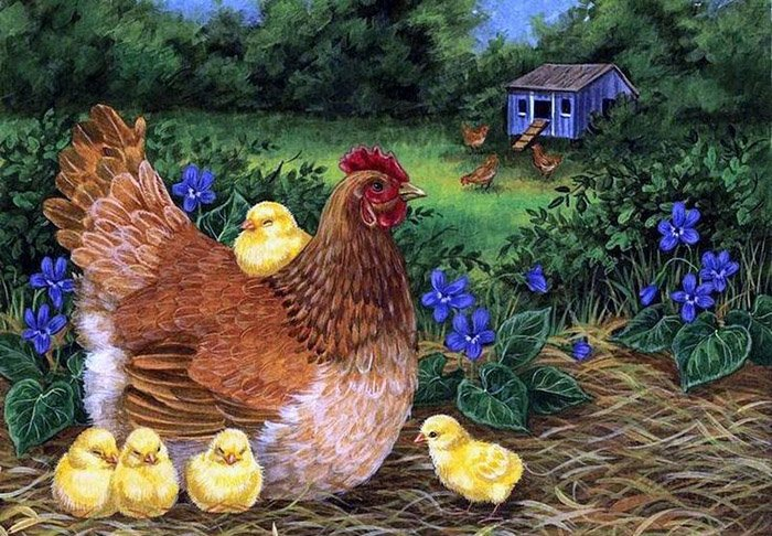 Загадки о домашних животных: курица