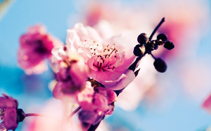 Загадки про весну для школярів