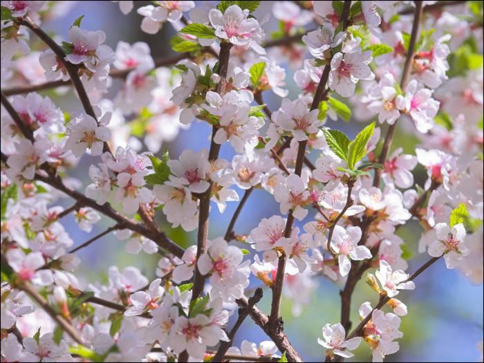 Загадки про квіти для дітей. Цвіт
