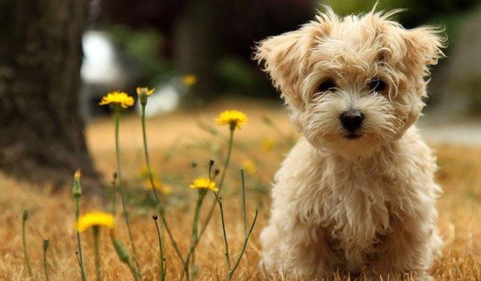 Детские загадки о животных: пес