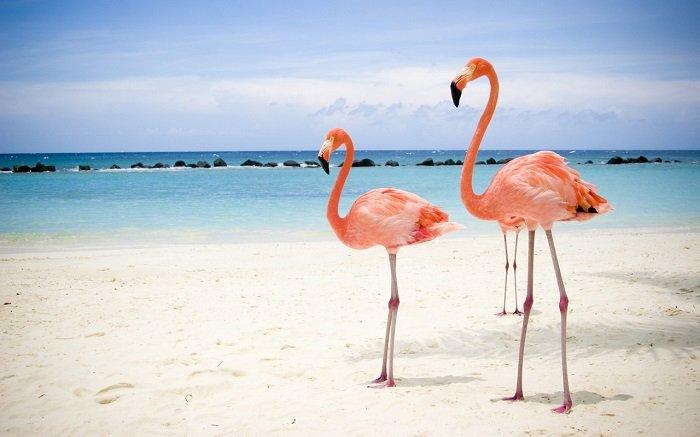 Загадки про птиц: Фламинго