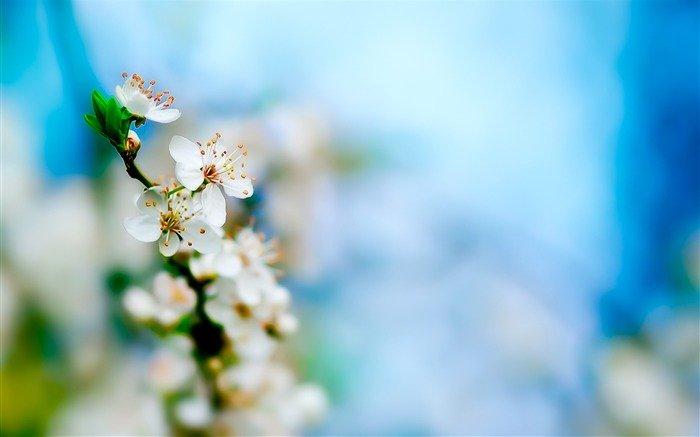 Загадки про квіти: Яблуня