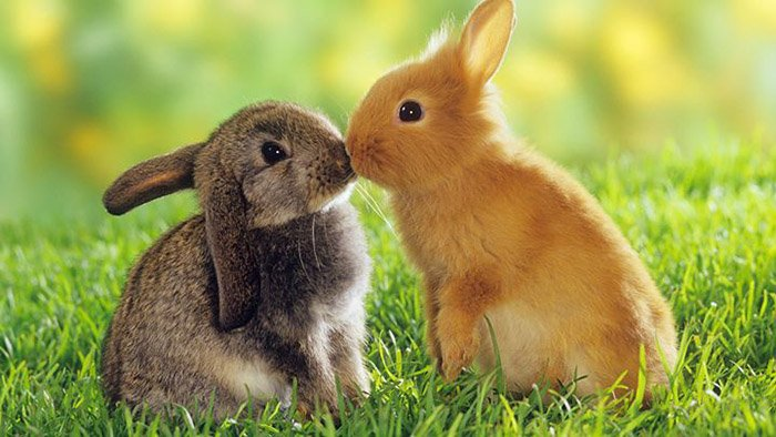 Загадки о домашних животных: кролик