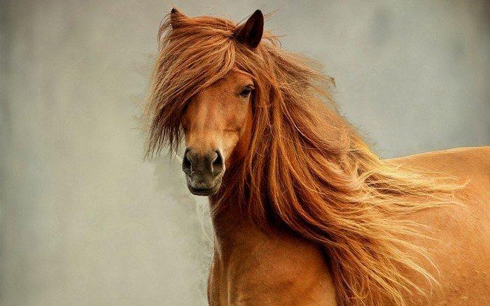 Загадки про тварин: кінь