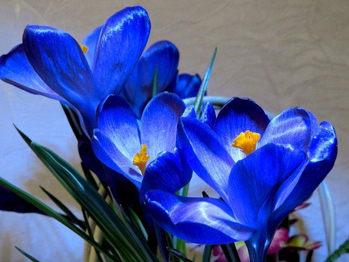 Загадки про квіти для дітей. Пролісок