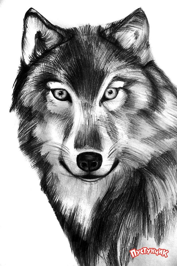 Как нарисовать волка поэтапно, фото 7