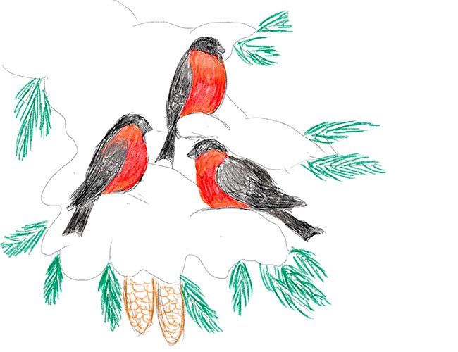 Рисуем снегирей на ветке. Шаг 8