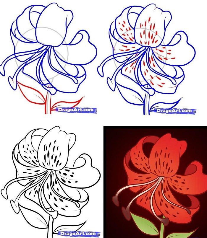 Как нарисовать цветок - Лилия, фото 2