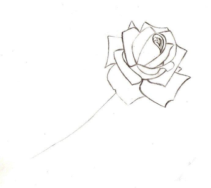 Как нарисовать розу шаг за шагом – схема, фото 10