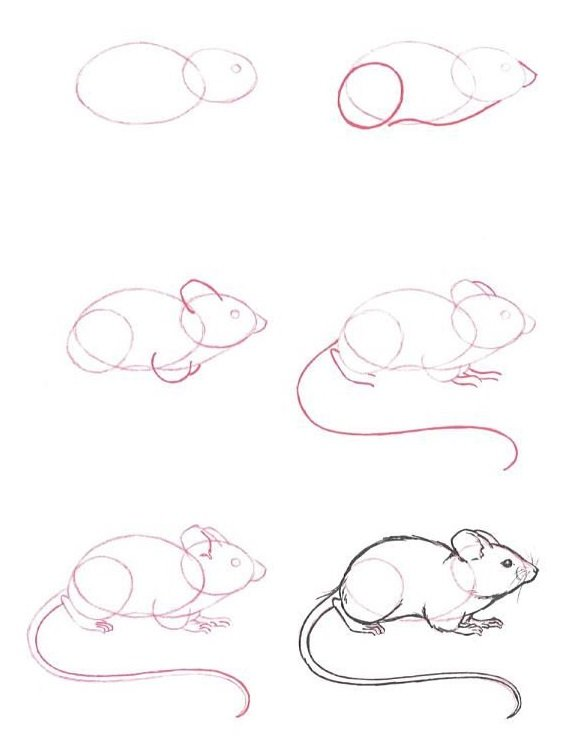 Як намалювати мишу, фото 33