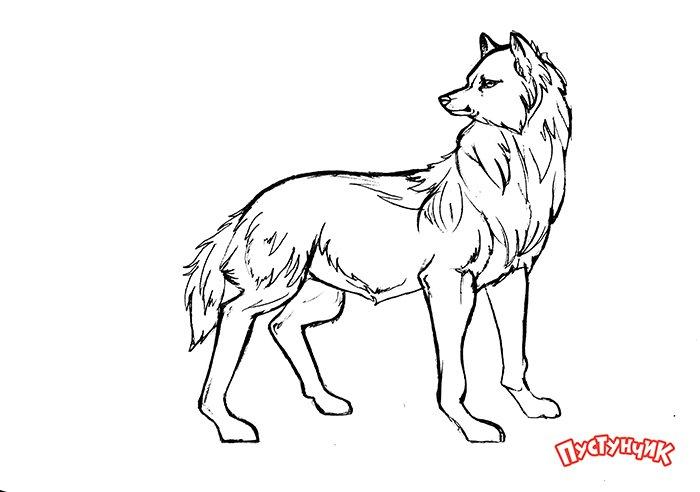 Як намалювати вовка крок за кроком, фото 17