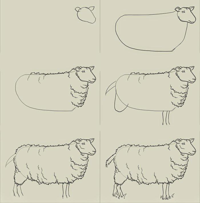 Как красиво нарисовать барашка схема 7