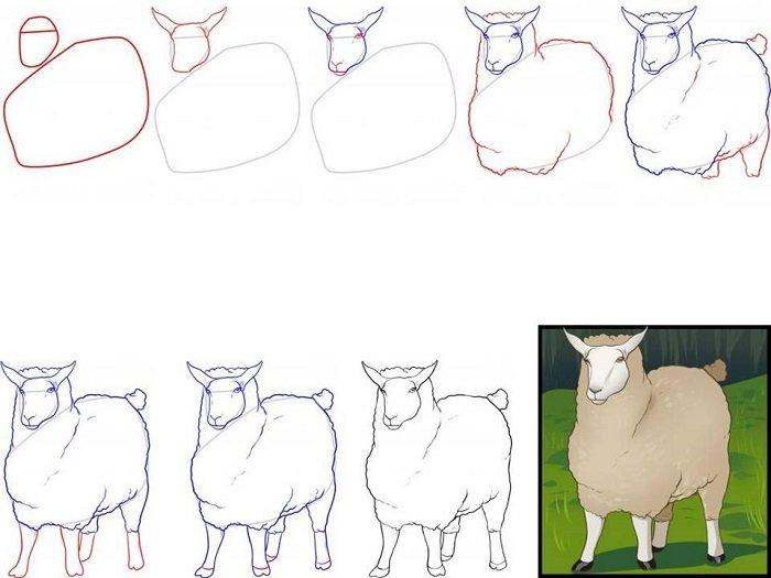 Как красиво нарисовать барашка схема 6