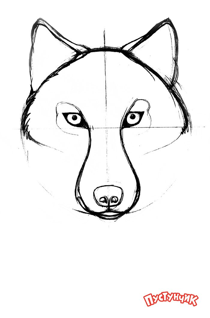 Як намалювати вовка крок за кроком, фото 3