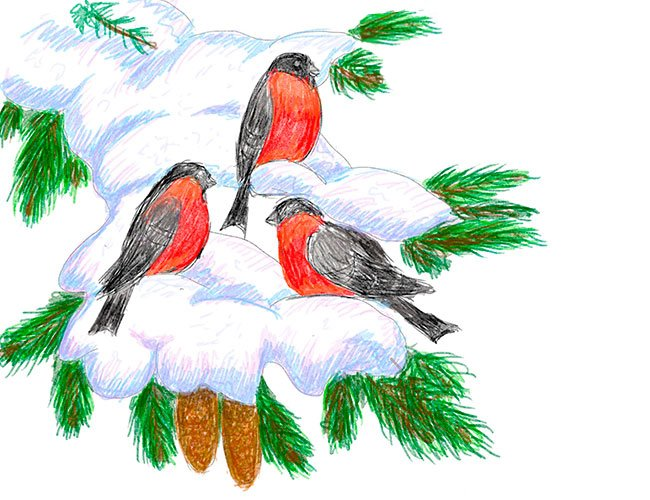 Рисуем снегирей на ветке. Шаг 11