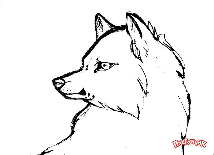 Як намалювати вовка крок за кроком, фото 14