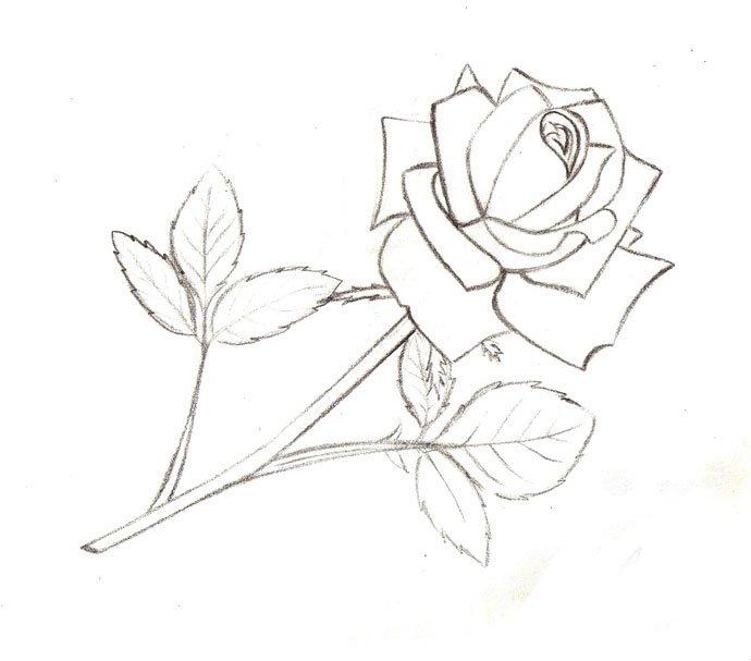Как нарисовать розу шаг за шагом – схема, фото 11
