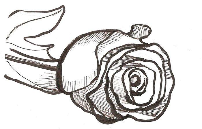 Как нарисовать розу шаг за шагом – схема, фото 5