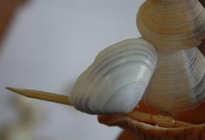 Как сделать кораблик из ракушек своими руками-10