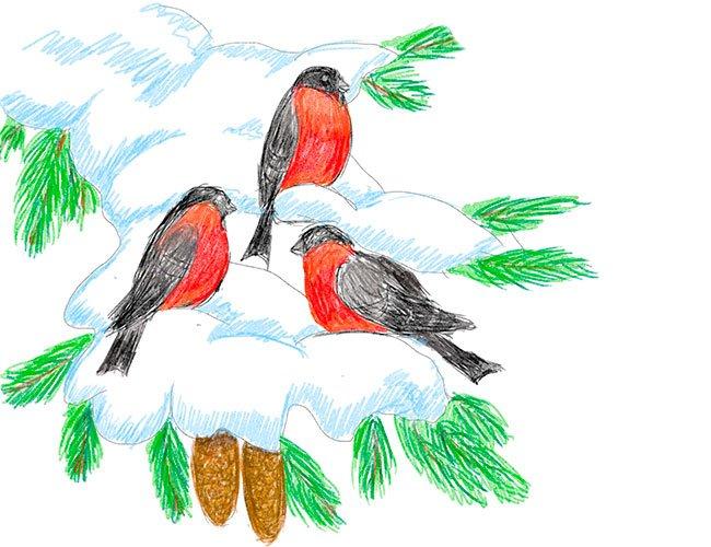 Рисуем снегирей на ветке. Шаг 10