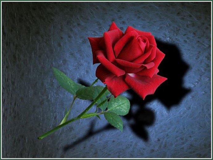 Как нарисовать розу шаг за шагом – схема, фото 7