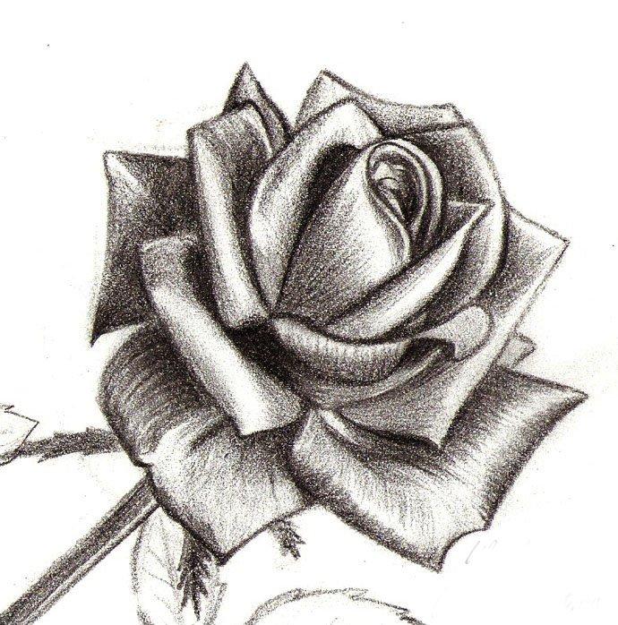 Как нарисовать розу шаг за шагом – схема, фото 14