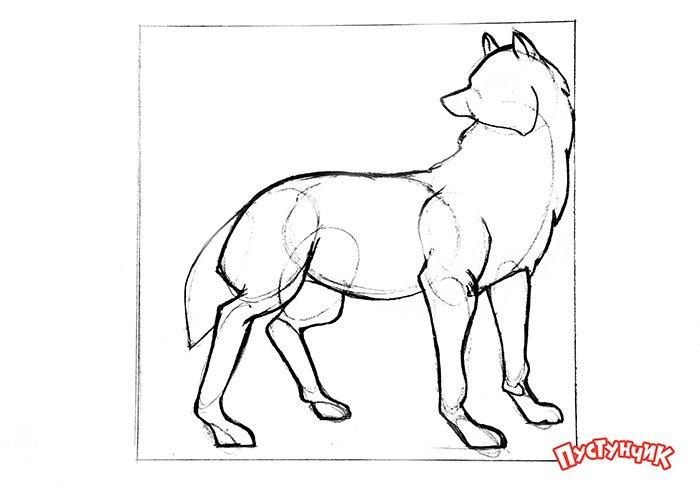 Як намалювати вовка крок за кроком, фото 13