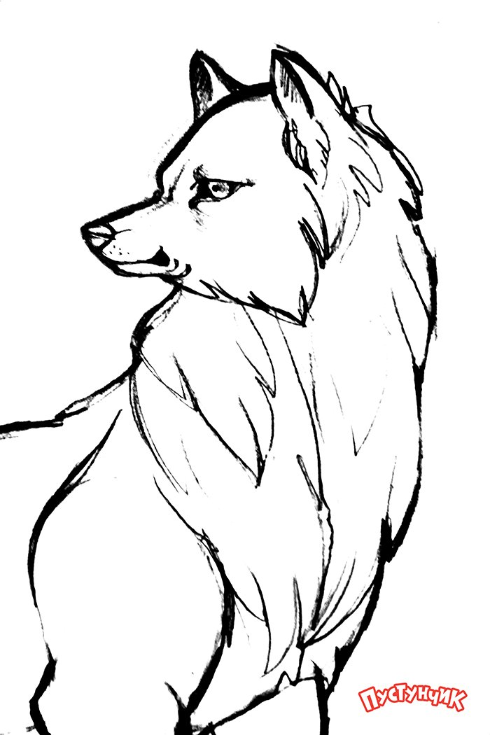 Как нарисовать волка поэтапно, фото 14
