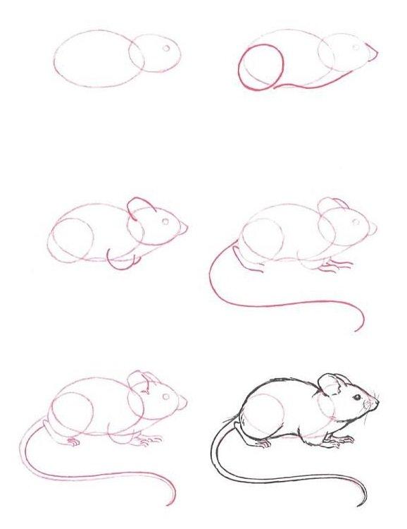 Как нарисовать мышку поэтапно, фото 33