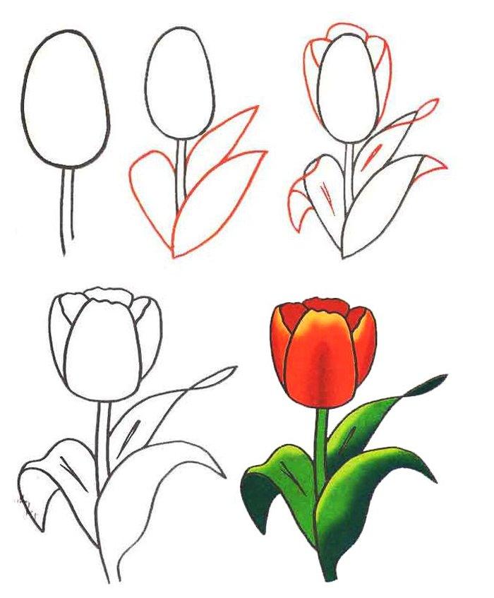Нарисовать тюльпан картинка
