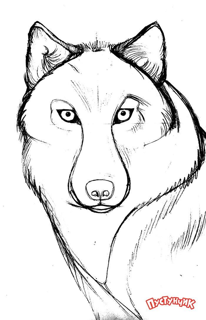 Як намалювати вовка крок за кроком, фото 4