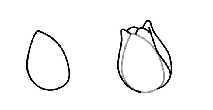 Як намалювати тюльпани Схема 1