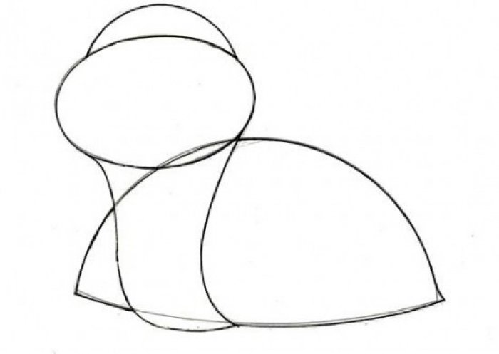 Как нарисовать черепаху карандашом поэтапно, фото 2