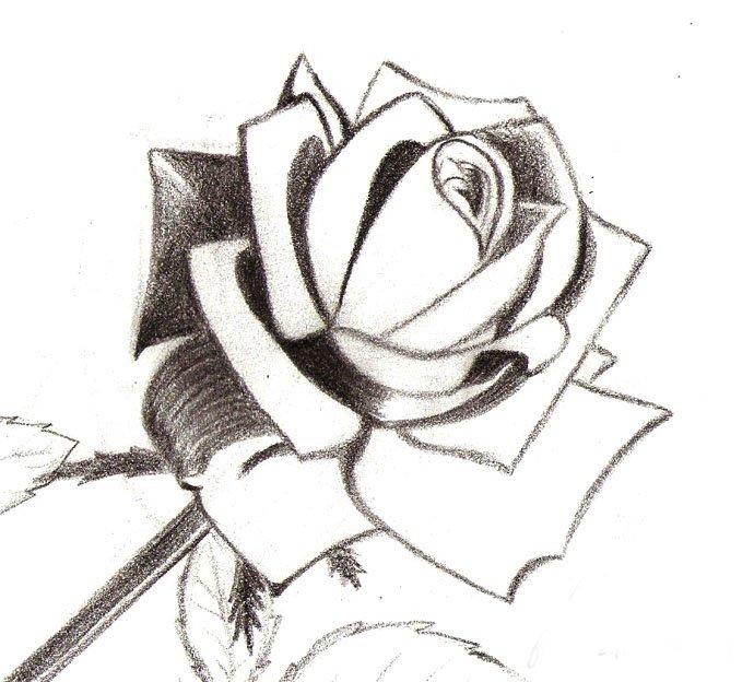 Как нарисовать розу шаг за шагом – схема, фото 12