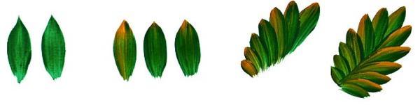 Элементы петриковской росписи: листики