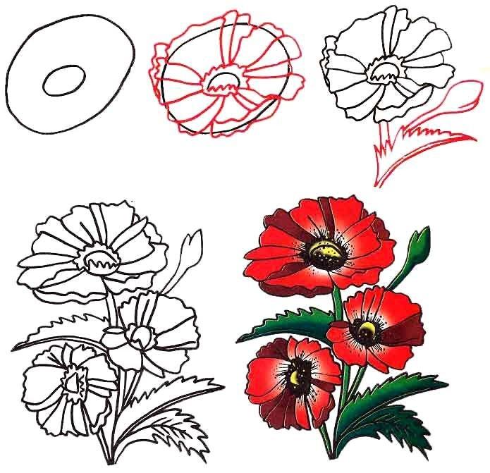 Как нарисовать цветок - Красные маки, фото