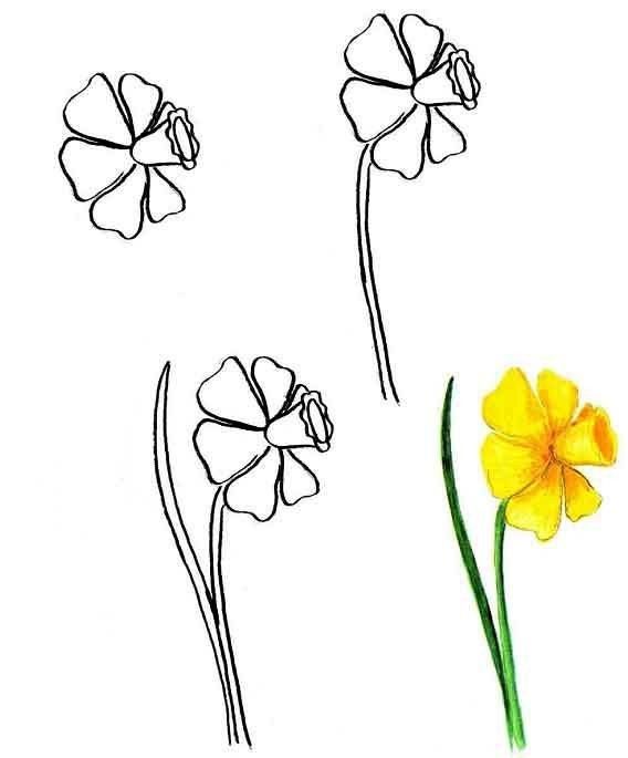 Как нарисовать цветок - Нарциссы, фото 1