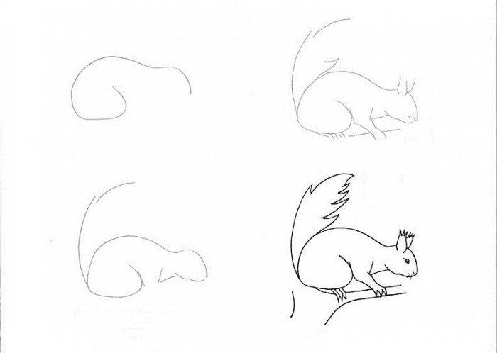 Як намалювати білку, схема