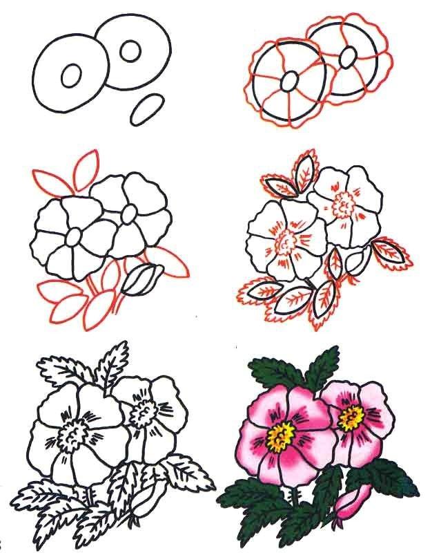 Как нарисовать цветок - Шиповник, фото