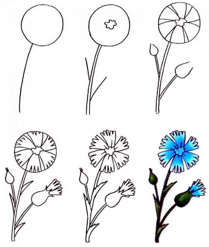 Как нарисовать цветок - Васильки, фото