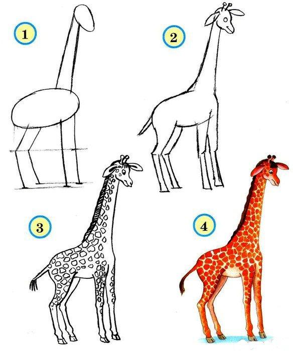 Як намалювати жирафа поетапно, фото 11