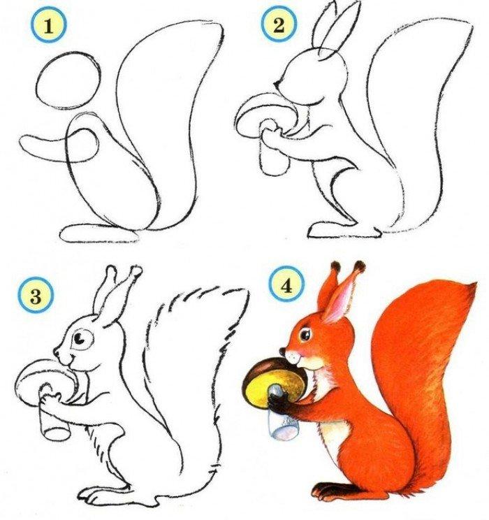 Как нарисовать белку, пошаговая схема