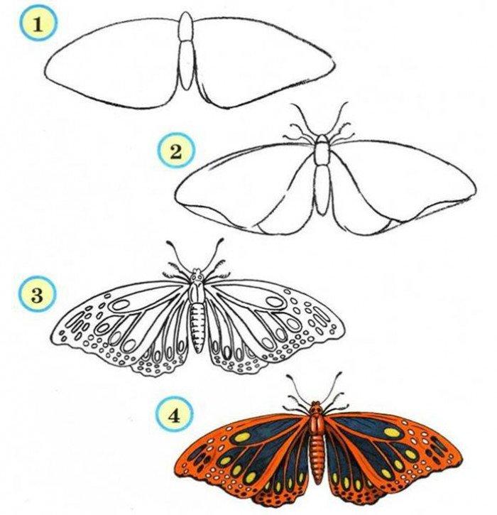 Як намалювати метелика крок за кроком, фото 8