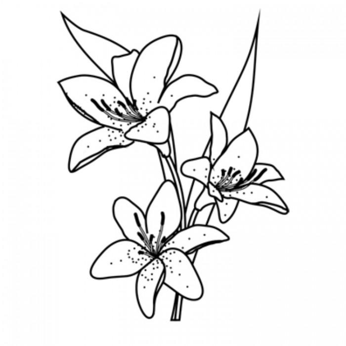 Как рисовать лилию