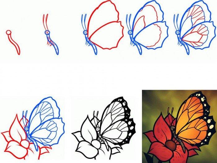 Як намалювати метелика крок за кроком, фото 3