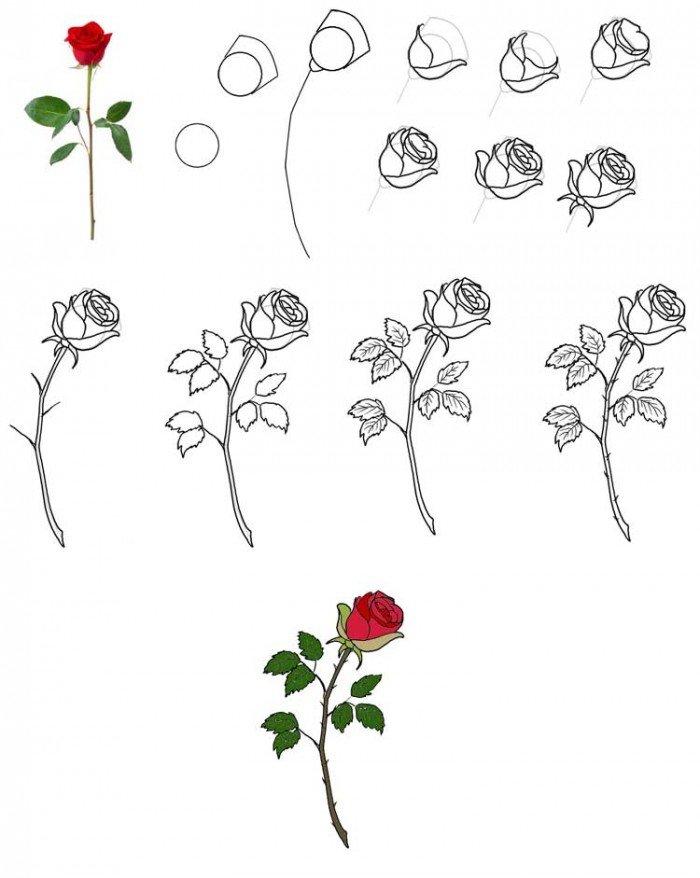 Як намалювати троянду, фото