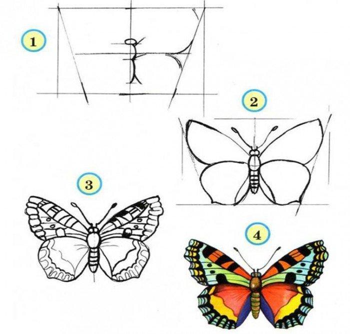 Як намалювати метелика крок за кроком, фото 4
